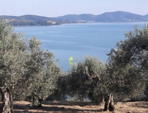 OLIVE CULTIVATION – TOWARDS A CIRCULAR ECONOMY  IN THE TRASIMENO AREA