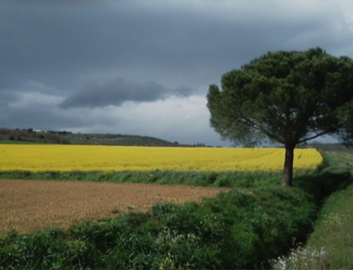 OILSEED CROPS IN THE TRASIMENO AREA (P. Burini – UCT)